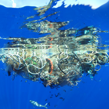 National Press Foundation link: Health of the Oceans