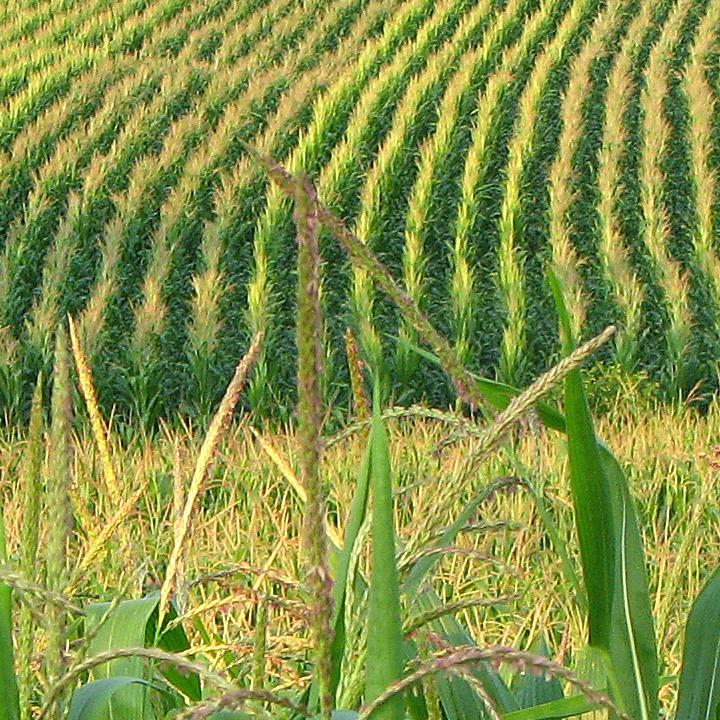 National Press Foundation link: Technology-Driven Agriculture