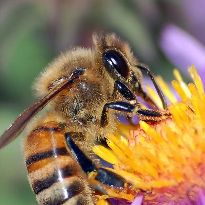 National Press Foundation link: Pollinators: Bees and Butterflies