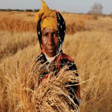 National Press Foundation link: How Farmers Help Feed the Global Population
