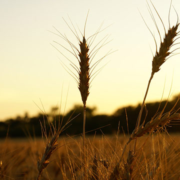 National Press Foundation link: The Changing Face of Agriculture