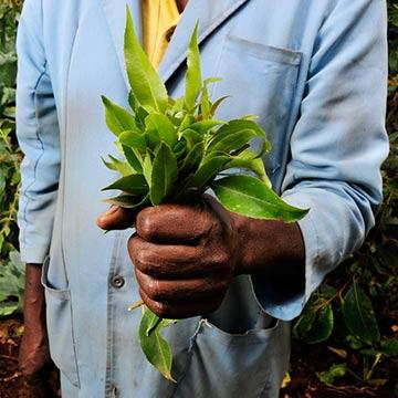 National Press Foundation link: Partnering to Change Agriculture