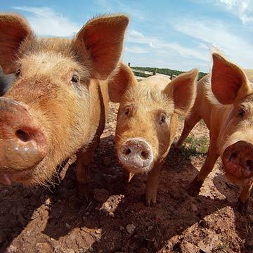 National Press Foundation link: Understanding Antibiotic Use in Farming