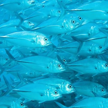 National Press Foundation link: Tracking All The Fish in the Sea