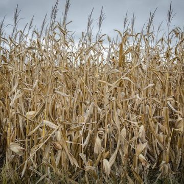 National Press Foundation link: Adapting Ag in a Changing Climate