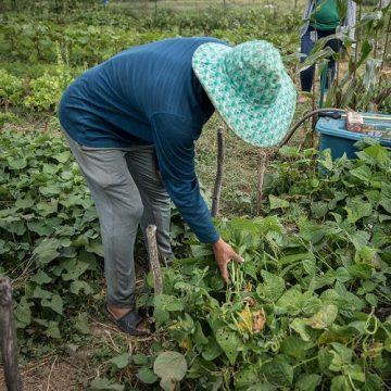 National Press Foundation link: Farming in the City