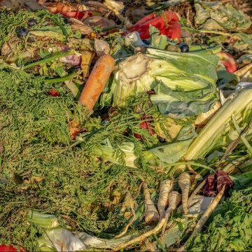 National Press Foundation link: Food Waste and Hunger