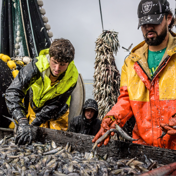 National Press Foundation link: Increasing the Catch