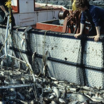 National Press Foundation link: How the U.S. Regulates Fisheries