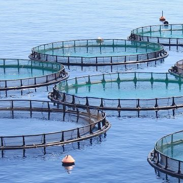 National Press Foundation link: Promises and Pitfalls of Aquaculture